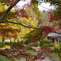 Photos: 三ッ池公園の秋