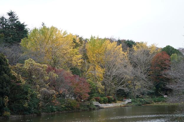 秋の三ッ池公園