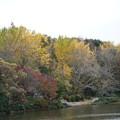 Photos: 秋の三ッ池公園