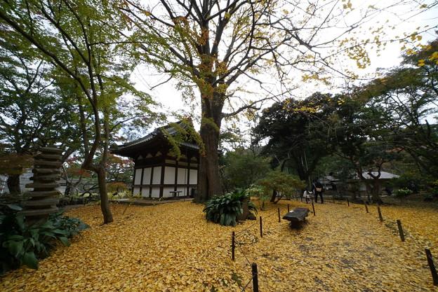 秋の三渓園内苑
