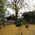 Photos: 秋の三渓園内苑