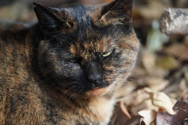 三渓園の野良猫