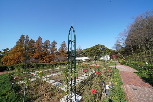 横浜市こども植物園