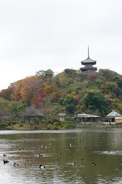 Photos: 初冬の三渓園
