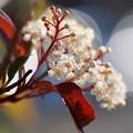 Photos: 初冬の花