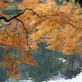 Photos: 湖畔のモミジ