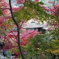三渓園内苑
