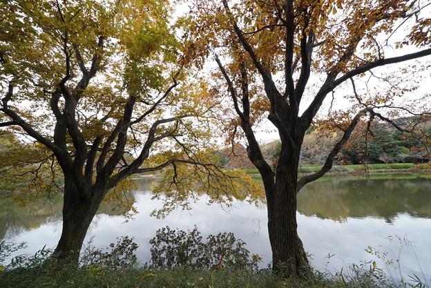 初冬の三ッ池公園