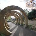 Photos: 初冬の山下公園