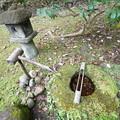 春草蘆の庭