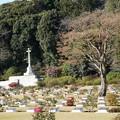 Photos: 英連邦戦死者墓地