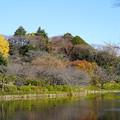 Photos: 三ッ池公園