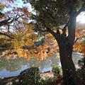 Photos: 湖畔の紅葉