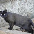Photos: 黒猫