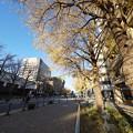 Photos: 日本大通り