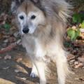 Photos: 雑種犬