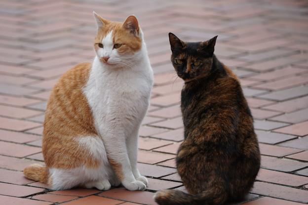 二匹の野良猫