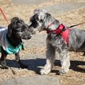 Photos: 犬挨拶