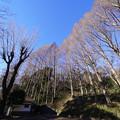 Photos: 冬の三ッ池公園