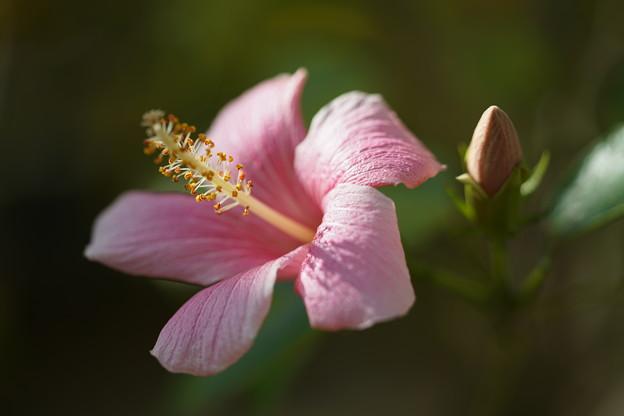 Photos: ピンクアイス