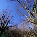 Photos: 欅
