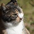 Photos: 三渓園の猫