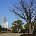 Photos: 山下公園・ランドマーク