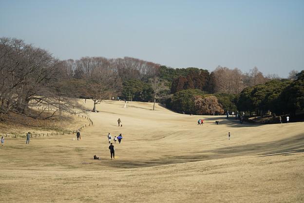 Photos: 根岸森林公園