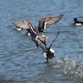 Photos: 飛ぶ鳥