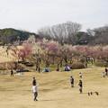 Photos: 冬の根岸森林公園