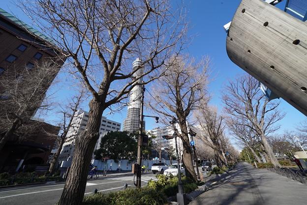 冬の銀杏並木
