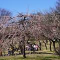 Photos: 藤牡丹枝垂れ