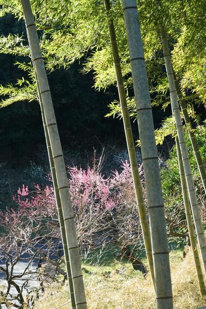 竹林と梅林