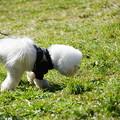 Photos: 犬のおしっこ