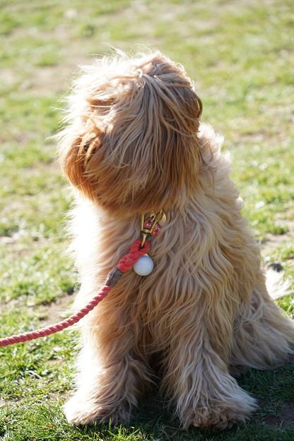 Photos: 髪の長い犬