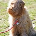髪の長い犬