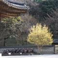 Photos: 冬のコリア庭園