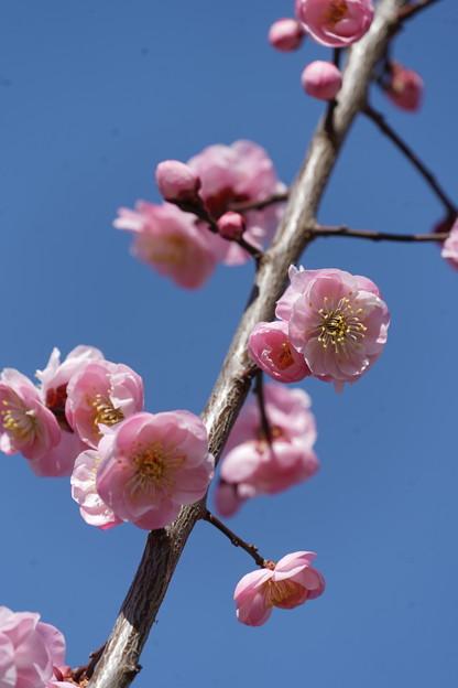 Photos: 武蔵野
