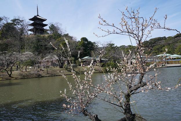 梅と三重塔