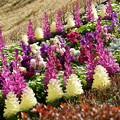 早春の花壇