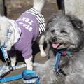 Photos: 二匹の犬