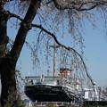 Photos: 枝垂れ桜と氷川丸