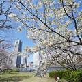 桜とランドマーク