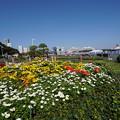 Photos: 山下公園花壇