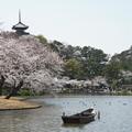 Photos: 早春の三渓園
