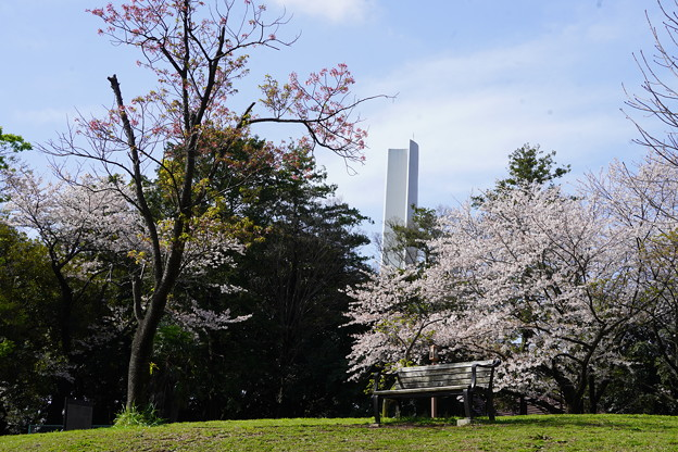 早春の三ツ沢公園