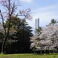 Photos: 早春の三ツ沢公園
