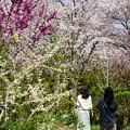 早春の横浜イングリッシュガーデン