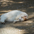Photos: 寝そべる猫