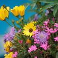 Photos: 春の花壇